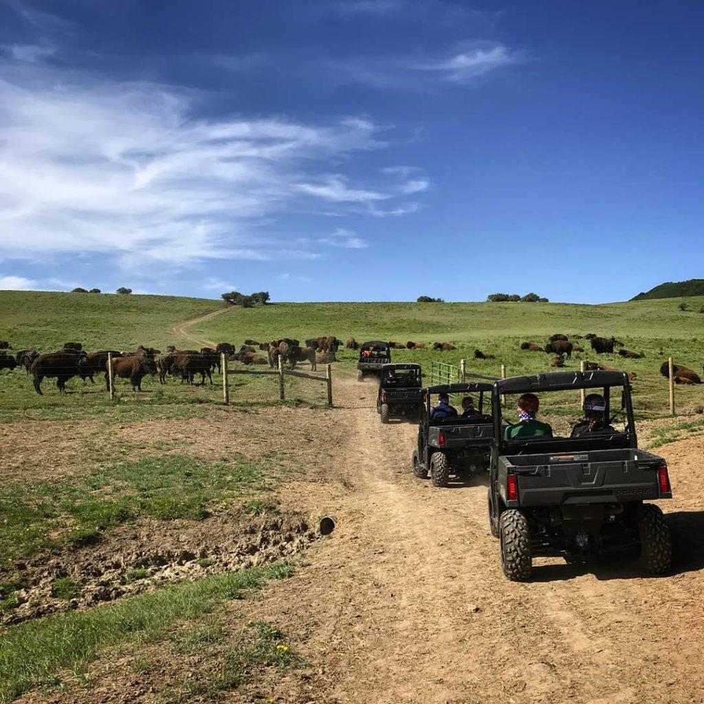 Lucky 8 Ranch