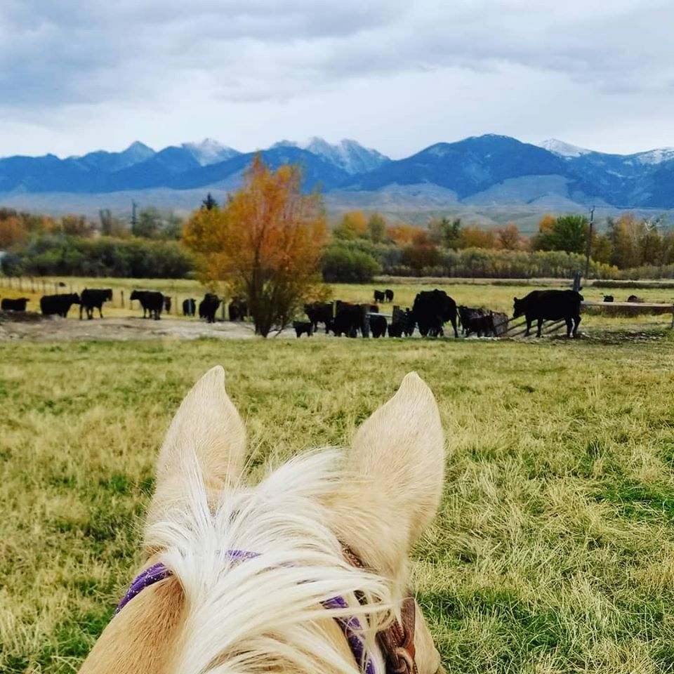 Cerise Ranch