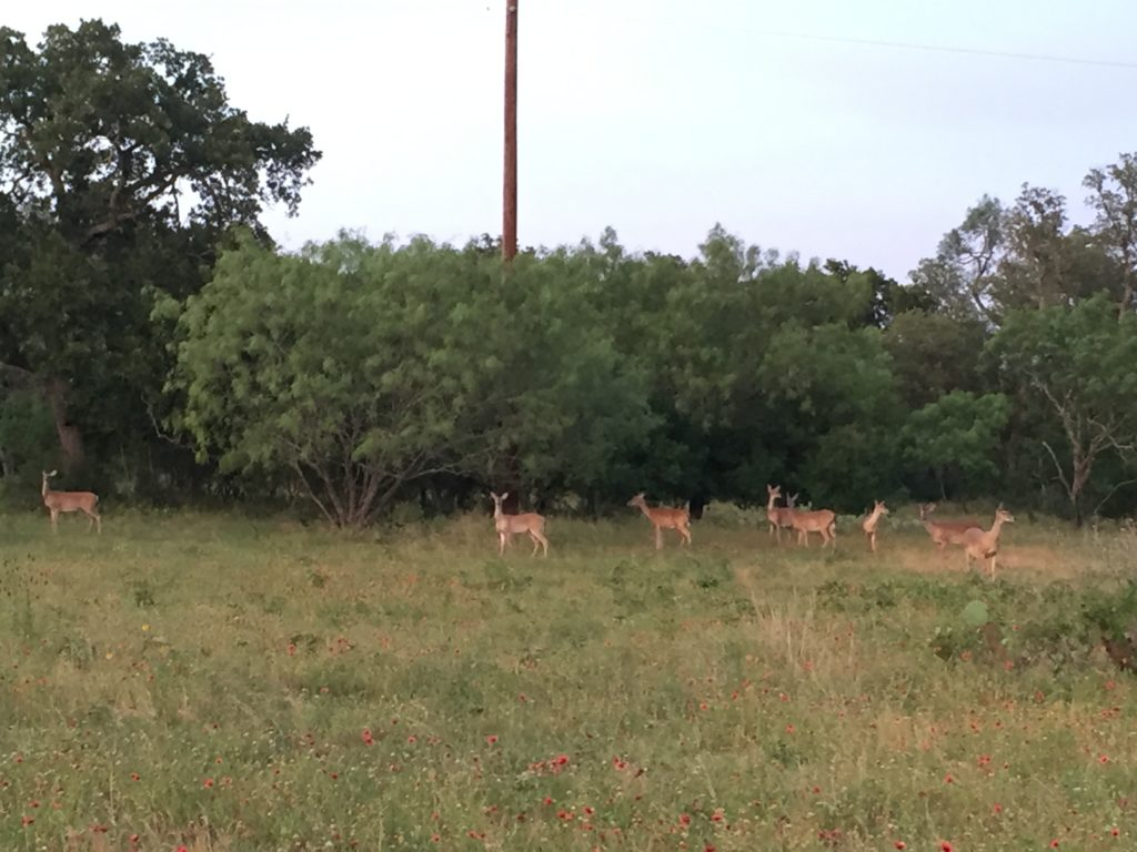 Pasion Iberica Ranch