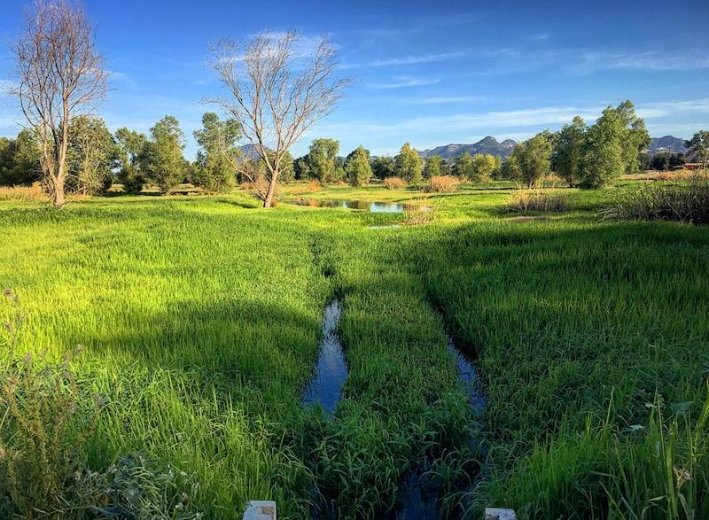 Graylodge Farms CA