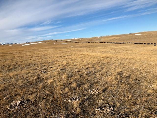 LF Ranch