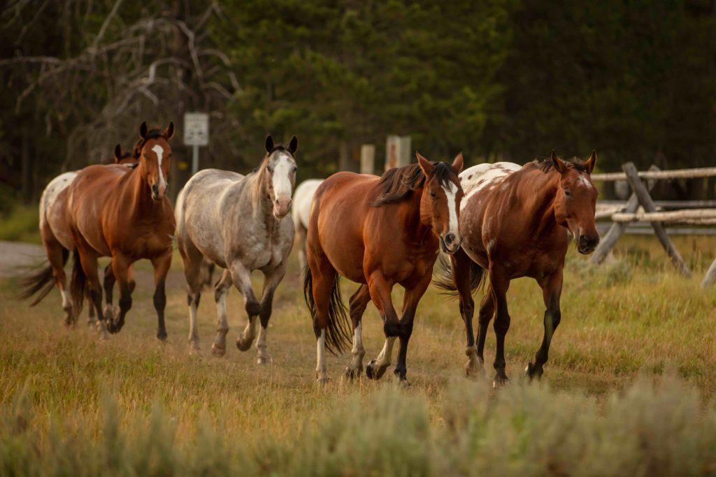Nine Quarter Circle Ranch