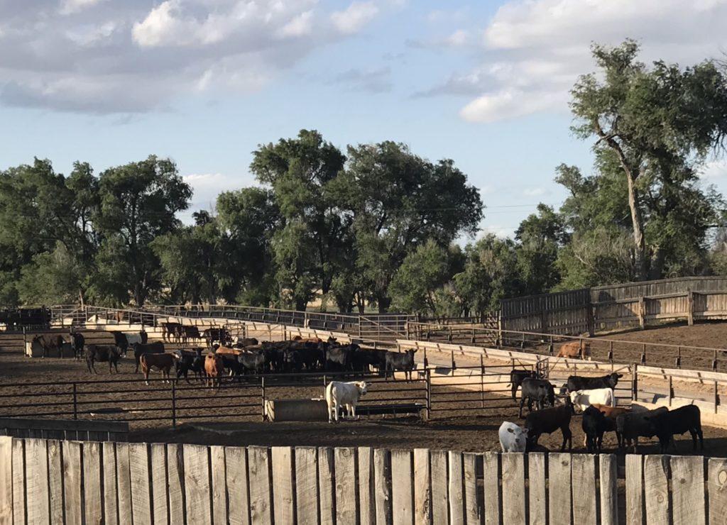 Arrow Crown Cattle Company