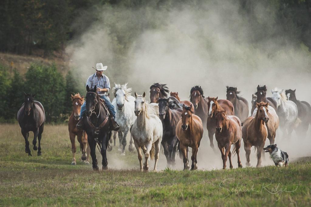 Western Pleasure Guest Ranch Horses
