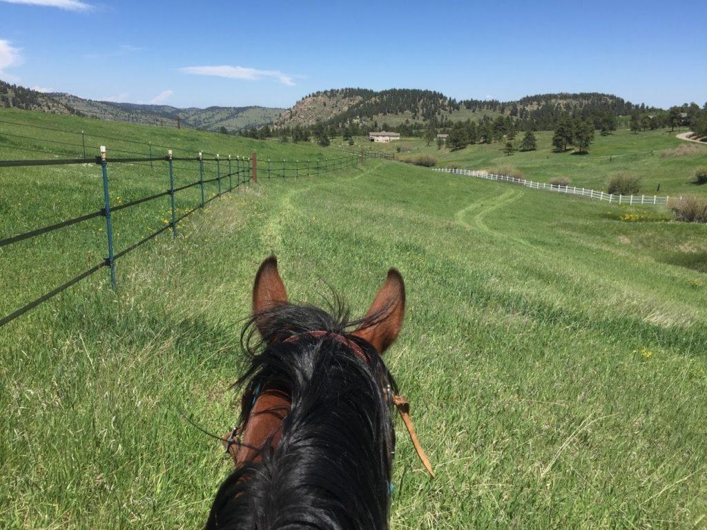 Mt. Falcon Equestrian