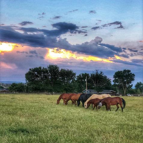 Nashwa Farms
