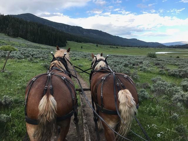 Silver Tip Ranch