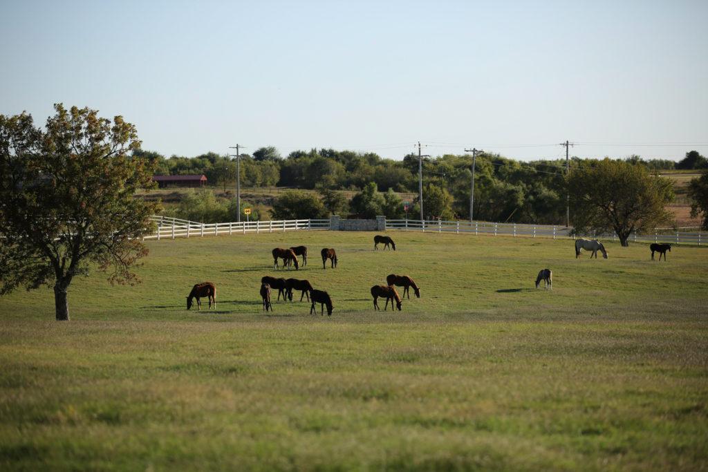 Royal Vista Ranches