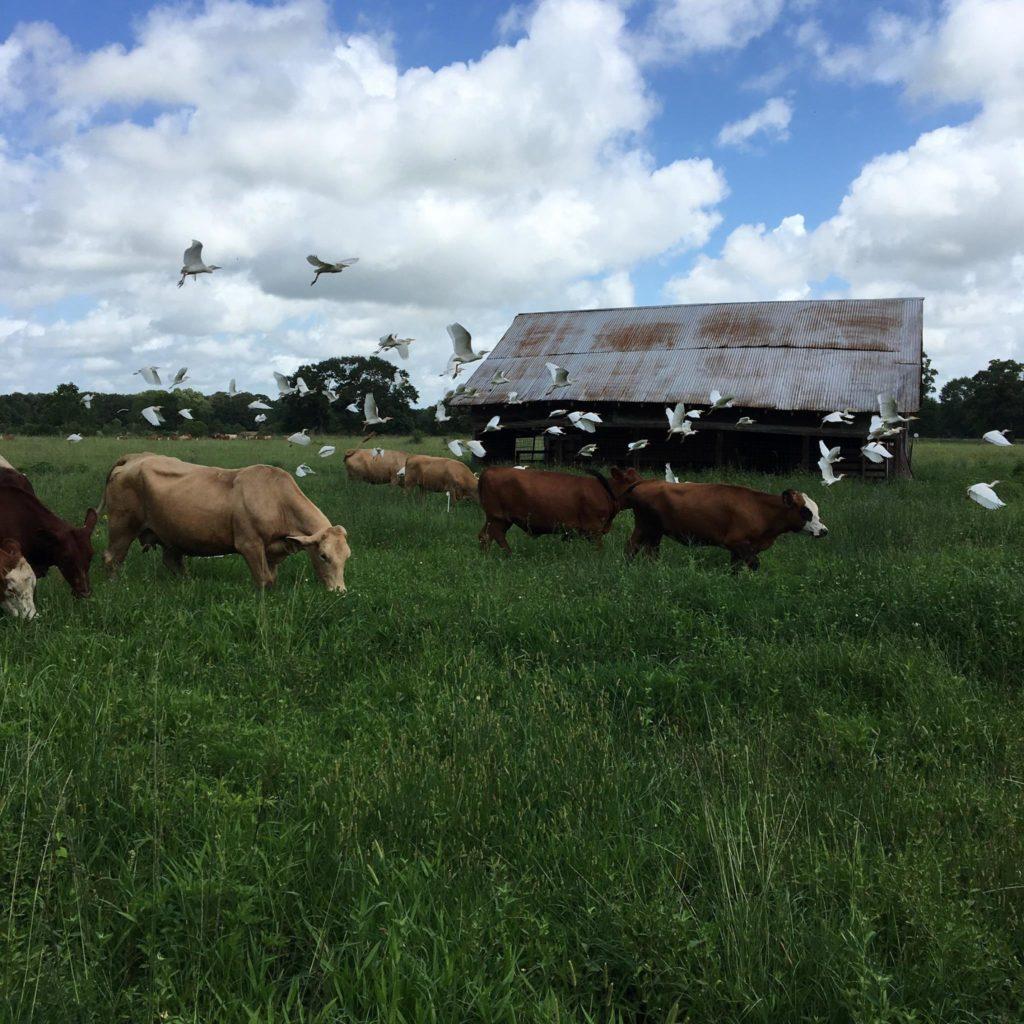 Brookshire Farm