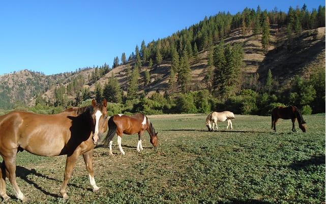 Eagle Creek Ranch - Washington