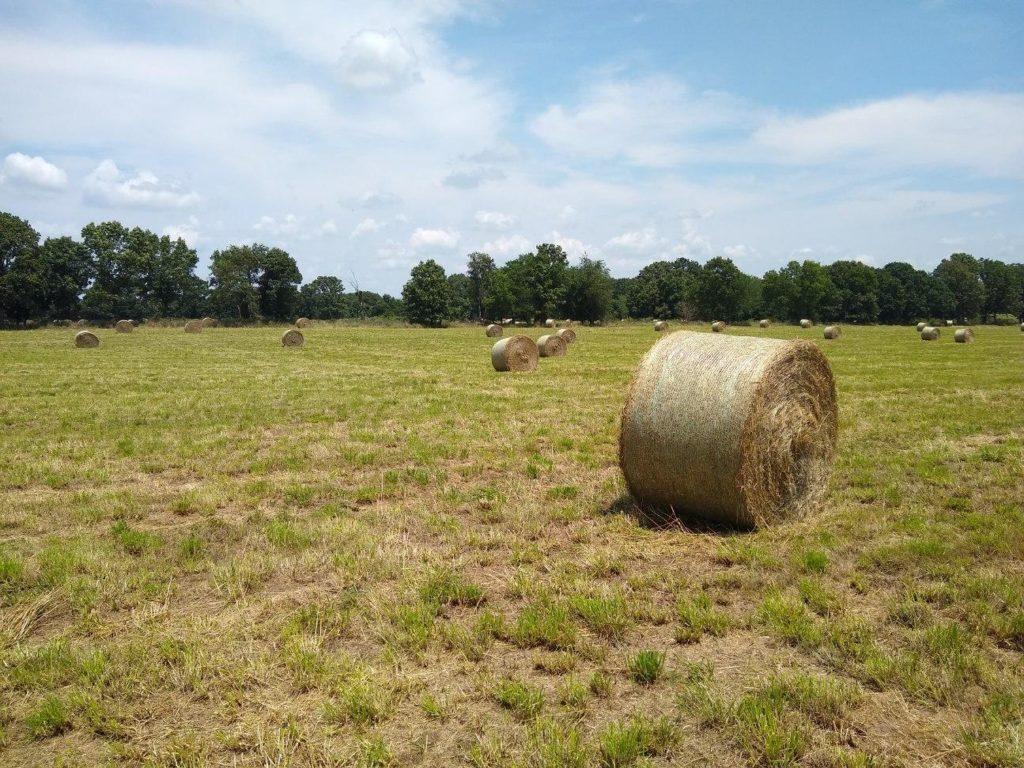 Wayshire Farms