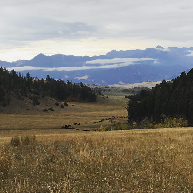 Lane Ranch - Montana