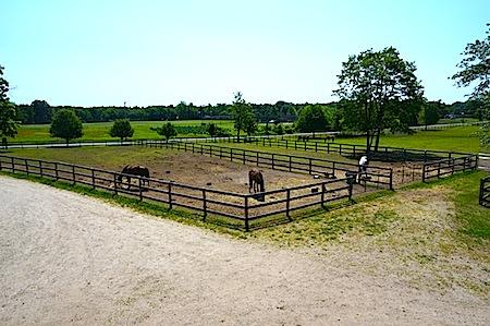 pasture3944+low