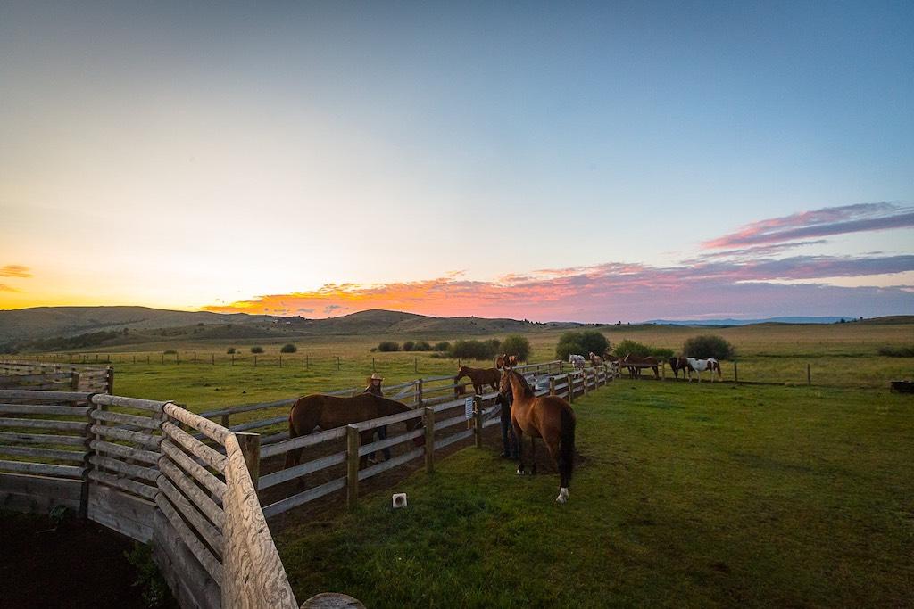 Rock Creek Cattle Company - Horses